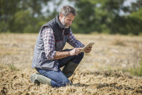 Man in field looking at a tablet