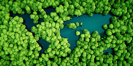 Aerial view of trees in a forest